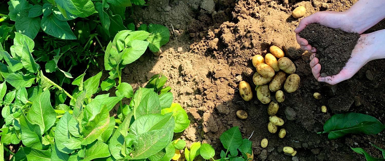 Mehr Liebe für Lebensmittel - Kartoffelhof Bannick