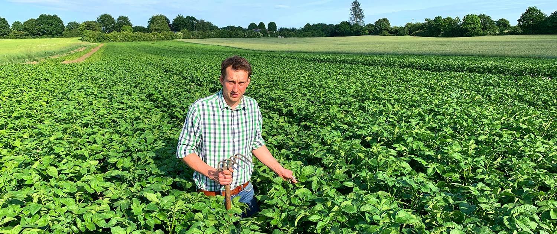 Henning Bannick in seinem Kartoffelfeld